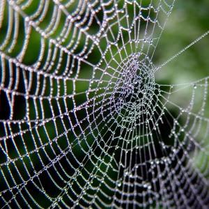 Photo of bedewed spiderweb