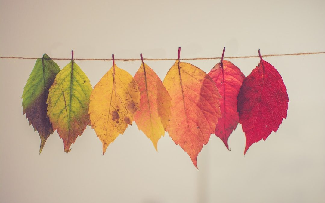 4 Seasonal Church Website Updates To Implement This Fall